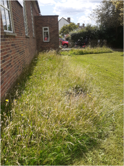 Stonehouse unmowed lawns